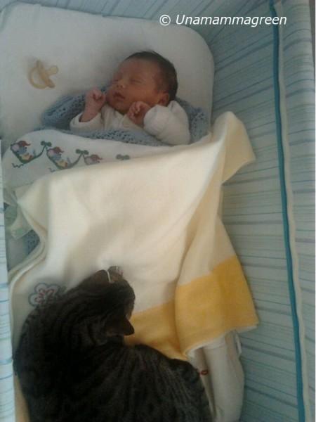 Re salomone e la saggezza impossibile una mamma green - Sculacciate a letto ...