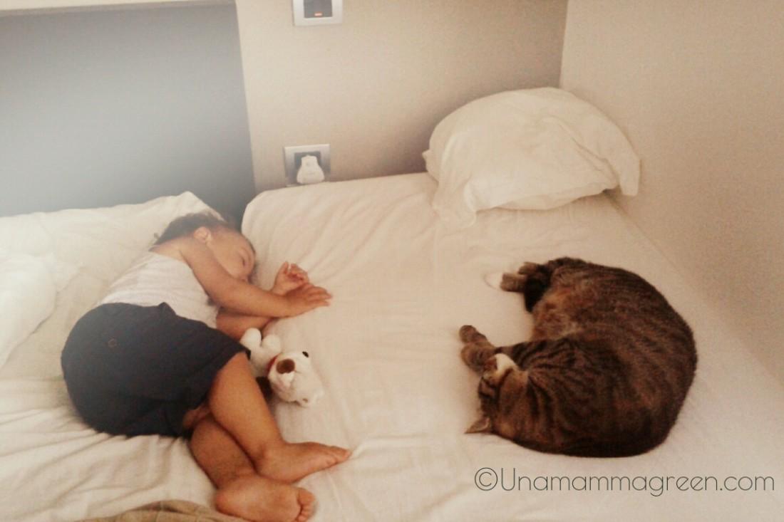 figli gatti