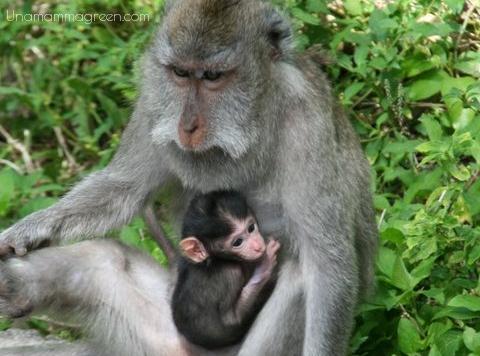 mamma scimmia