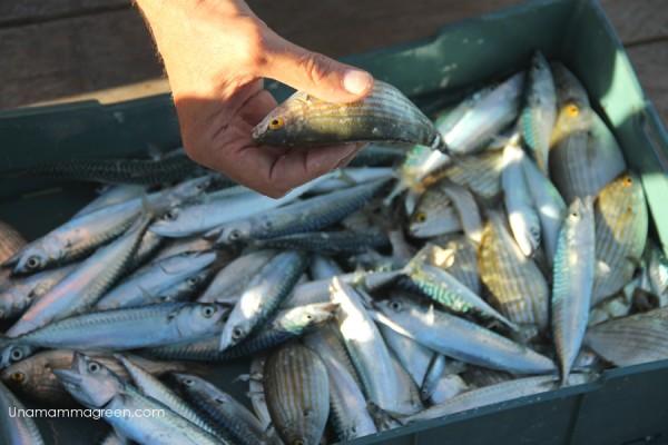battuta pesca trabucchi