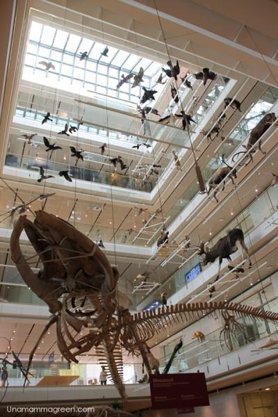 museo scienze trento