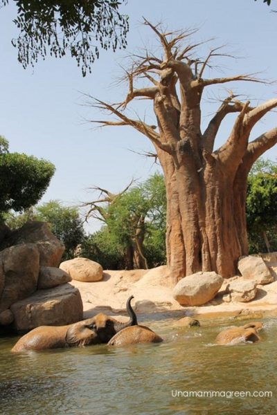 bagno-elefanti-valencia
