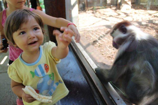 barcellona bamini piccoli zoo