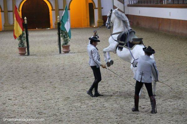 andalusia con bambini - cavalli jerez