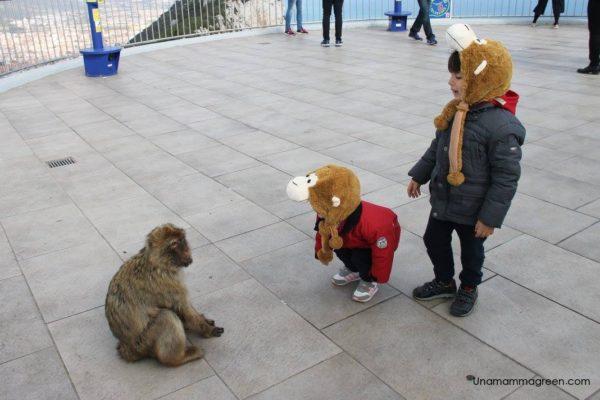 andalusia con bambini - scimmie