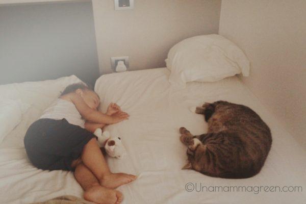 convivenza gatti e bambini