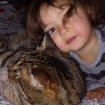 convivenza gatti bambini