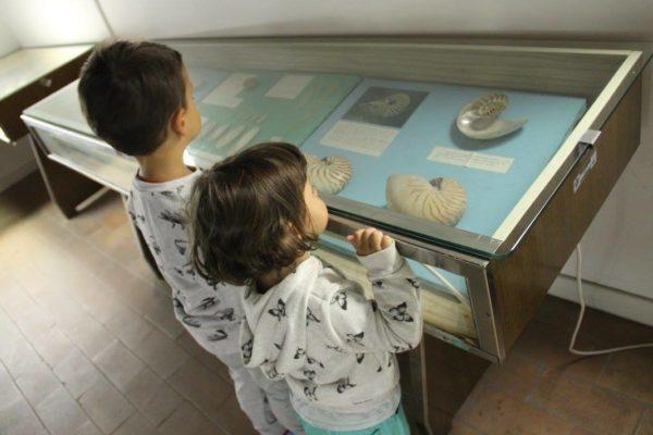 bellaria igea marina museo conchiglie