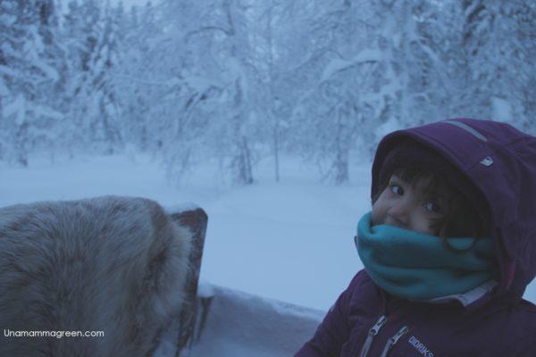 lapponia con bambini slitta renne