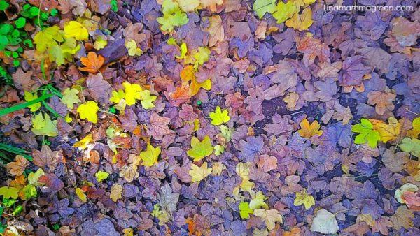 sopravvivere all'autunno